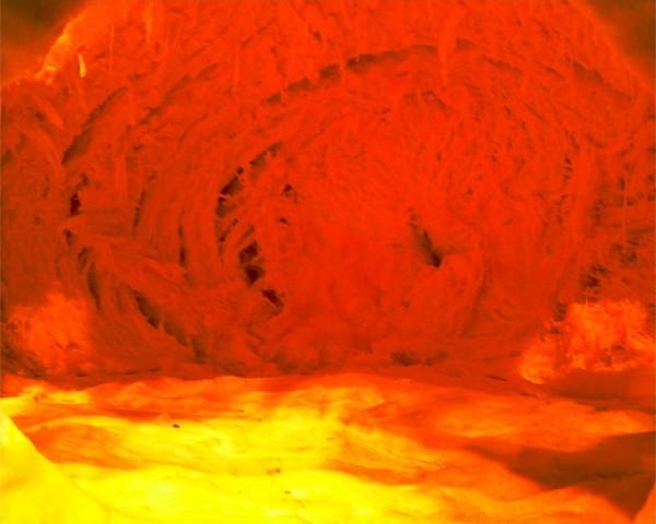 gigantopumpkin11
