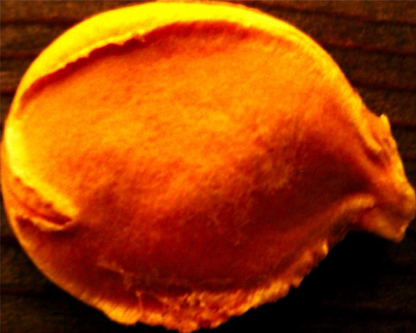 gigantopumpkin23